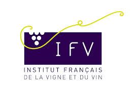 logo_ifv